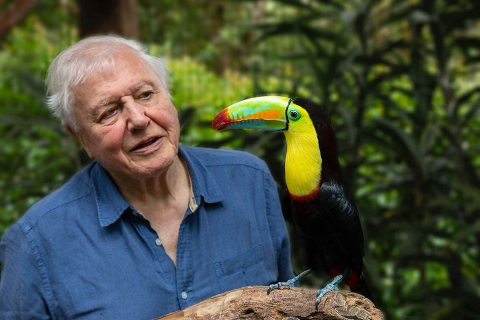 Ten Best David Attenborough Documentaries