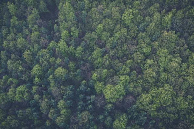 Forest lockdown wildlife